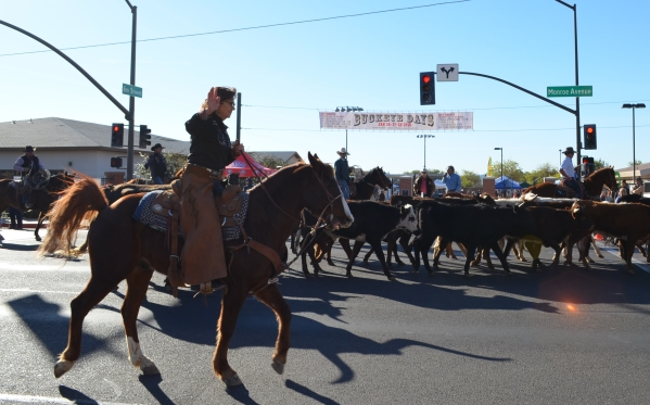Cattle Drive on Monroe Ave