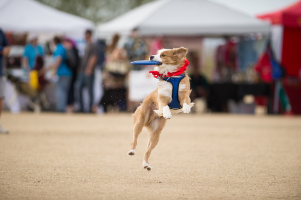 Fur-flying fun at Dog Days of Buckeye