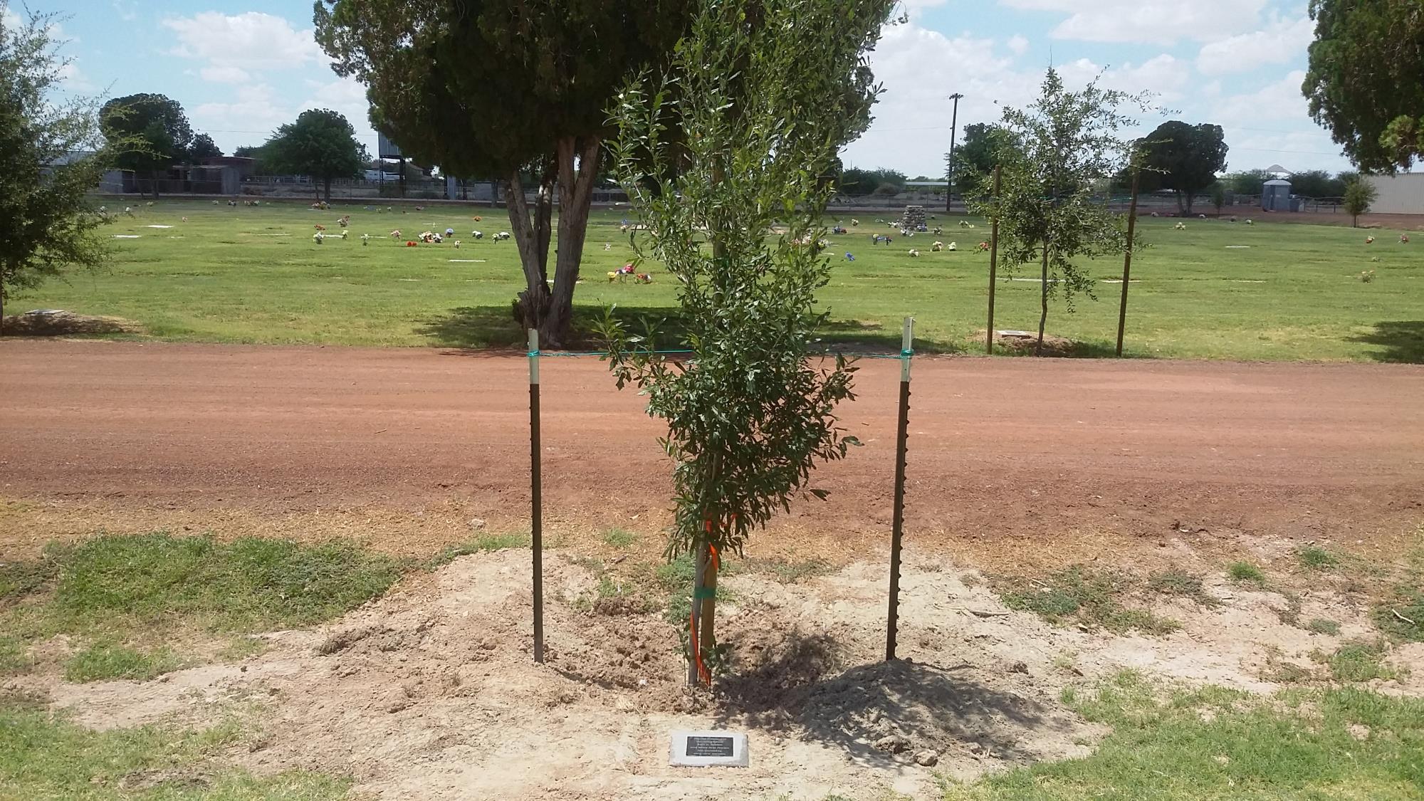 Adopt A Tree Or Bench Program City Of Buckeye